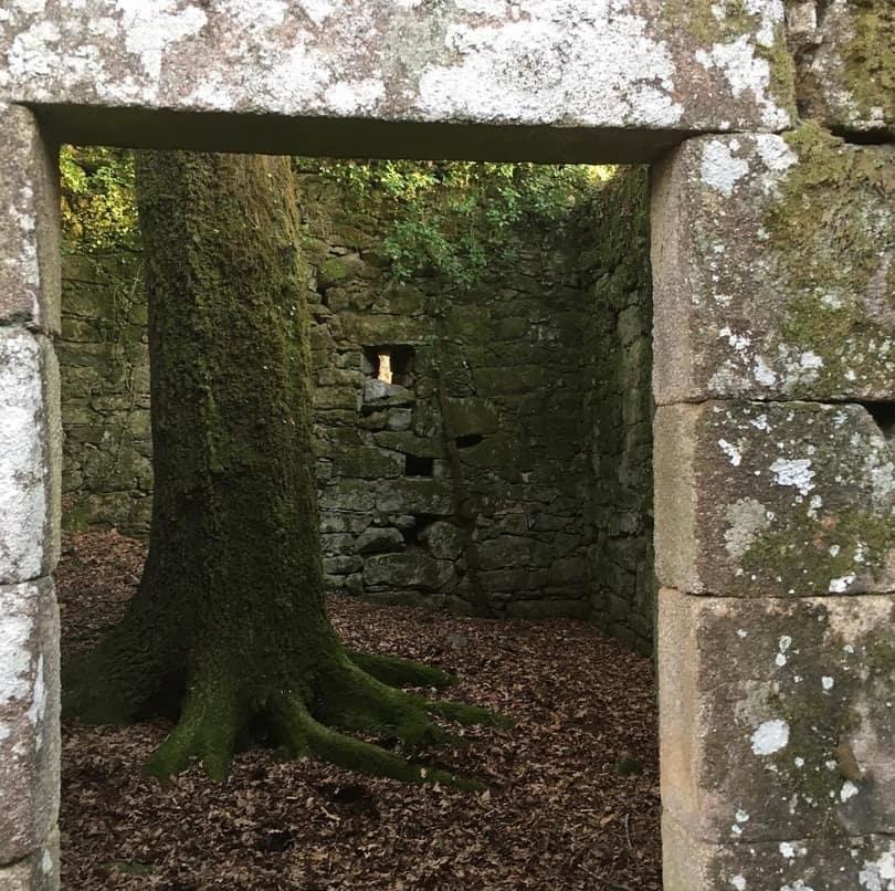 Un gran árbol crece en una de las estancias de A Escusalla
